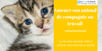 amener son animal de compagnie au travail